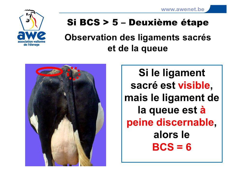 Si BCS > 5 – Deuxième étape Observation des ligaments sacrés
