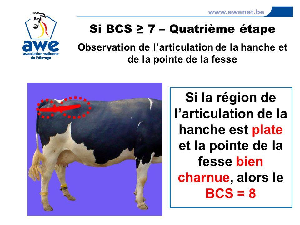 Si BCS ≥ 7 – Quatrième étape