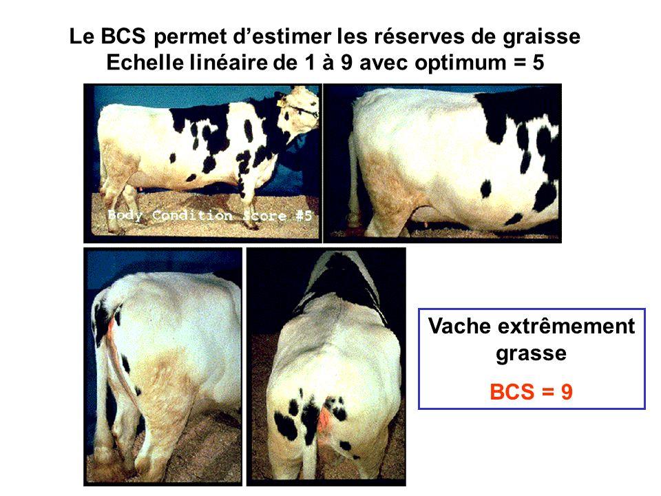 Le BCS permet d'estimer les réserves de graisse