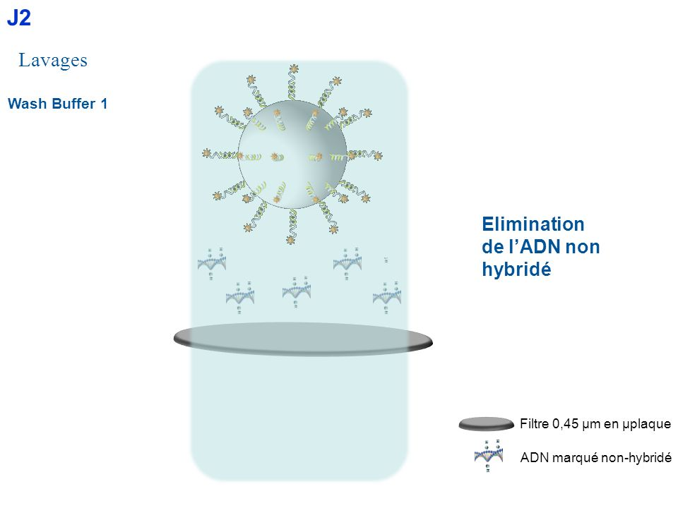J2 Lavages Elimination de l'ADN non hybridé Wash Buffer 1