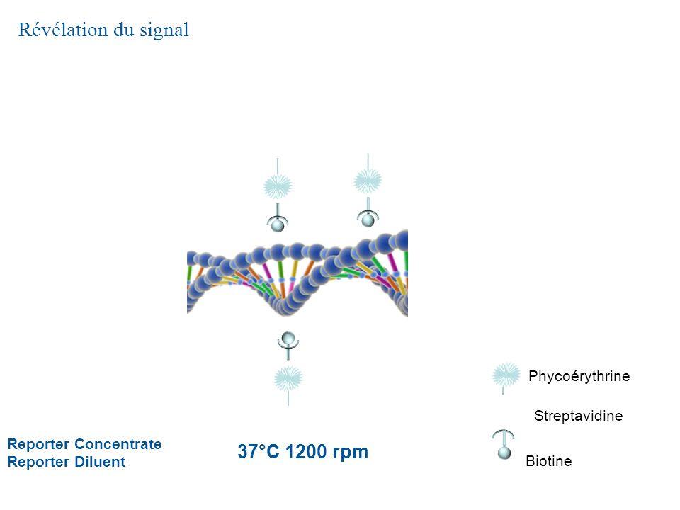 Révélation du signal 37°C 1200 rpm Phycoérythrine Streptavidine