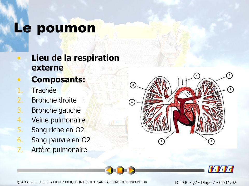 Le poumon Lieu de la respiration externe Composants: Trachée