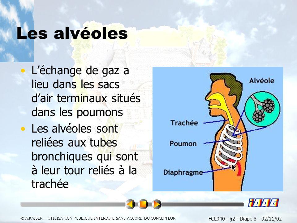 Les alvéoles L'échange de gaz a lieu dans les sacs d'air terminaux situés dans les poumons.