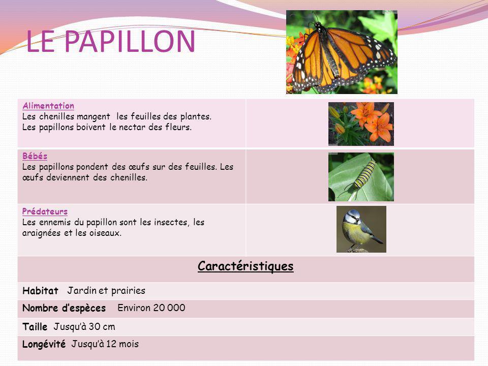 LE PAPILLON Caractéristiques Habitat Jardin et prairies
