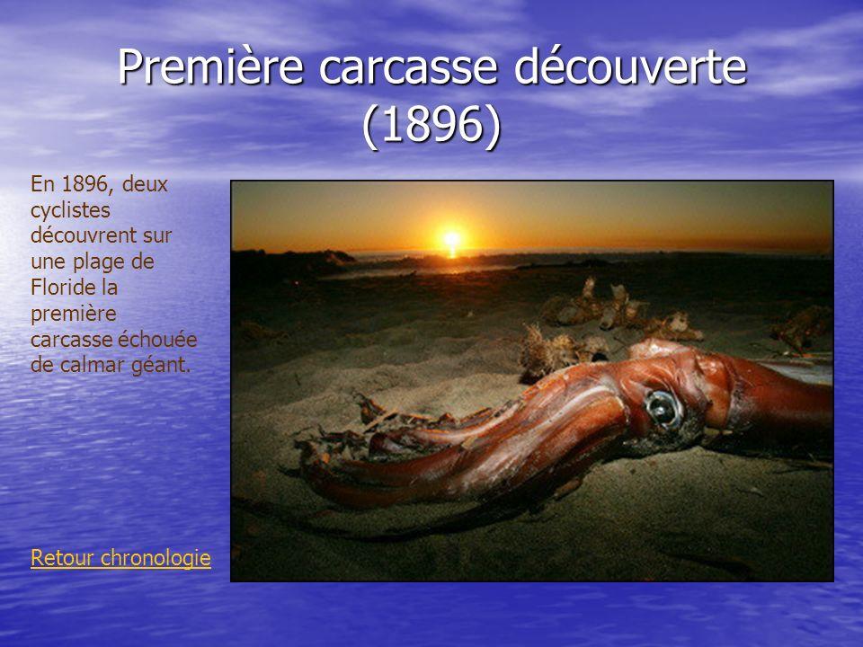 Première carcasse découverte (1896)