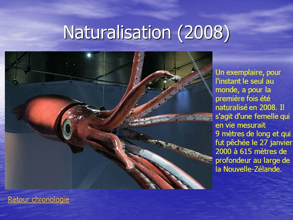Naturalisation (2008)
