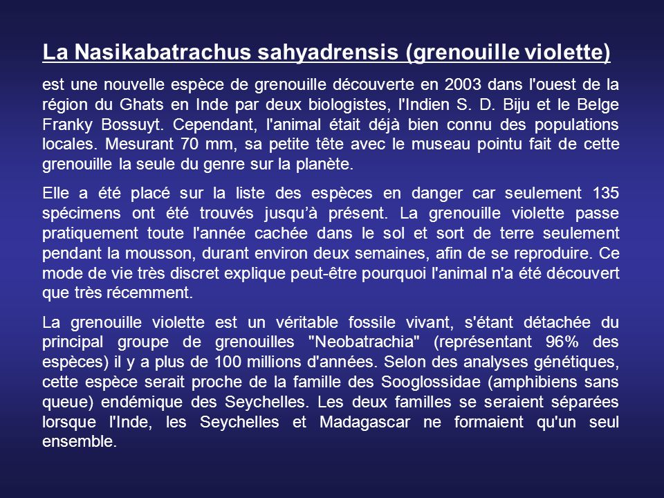 La Nasikabatrachus sahyadrensis (grenouille violette)