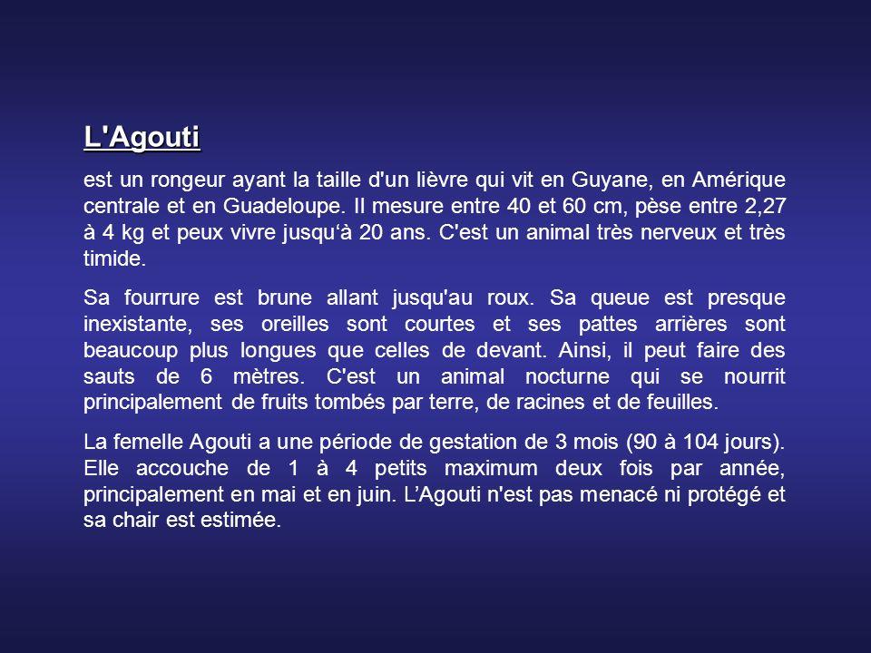 L Agouti