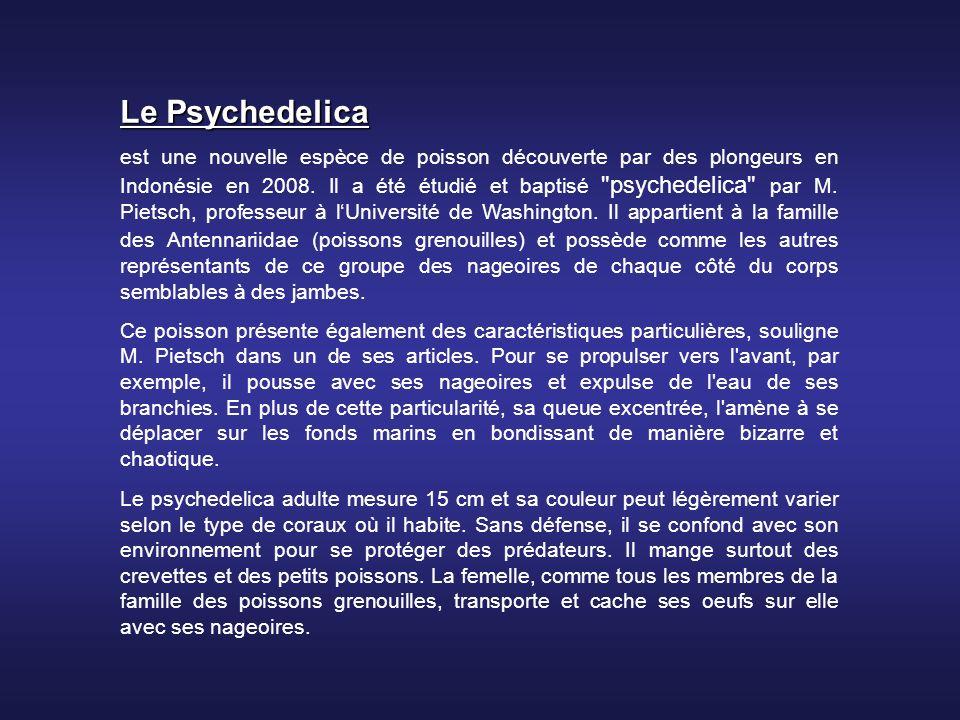 Le Psychedelica