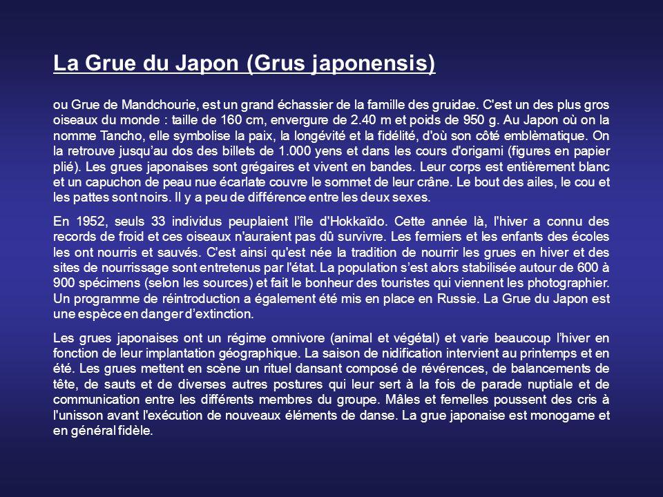 La Grue du Japon (Grus japonensis)