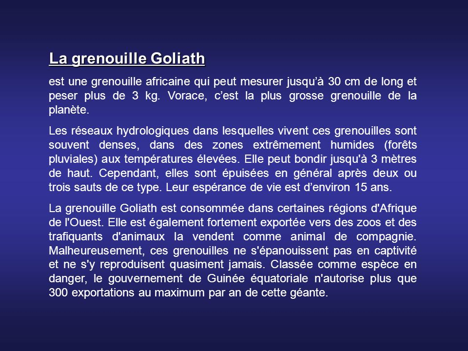 La grenouille Goliath