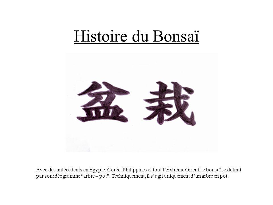 Histoire du Bonsaï