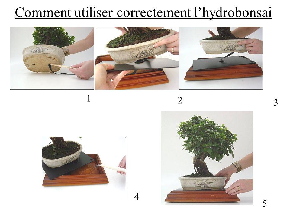 Comment utiliser correctement l'hydrobonsai