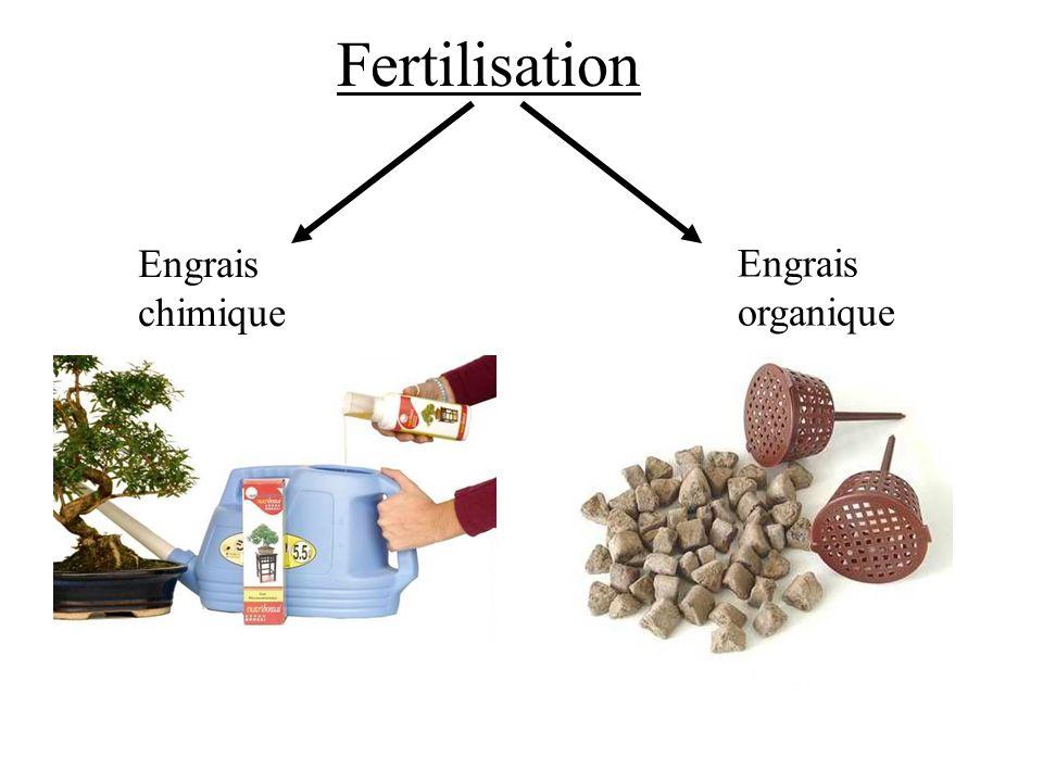 Fertilisation Engrais chimique Engrais organique