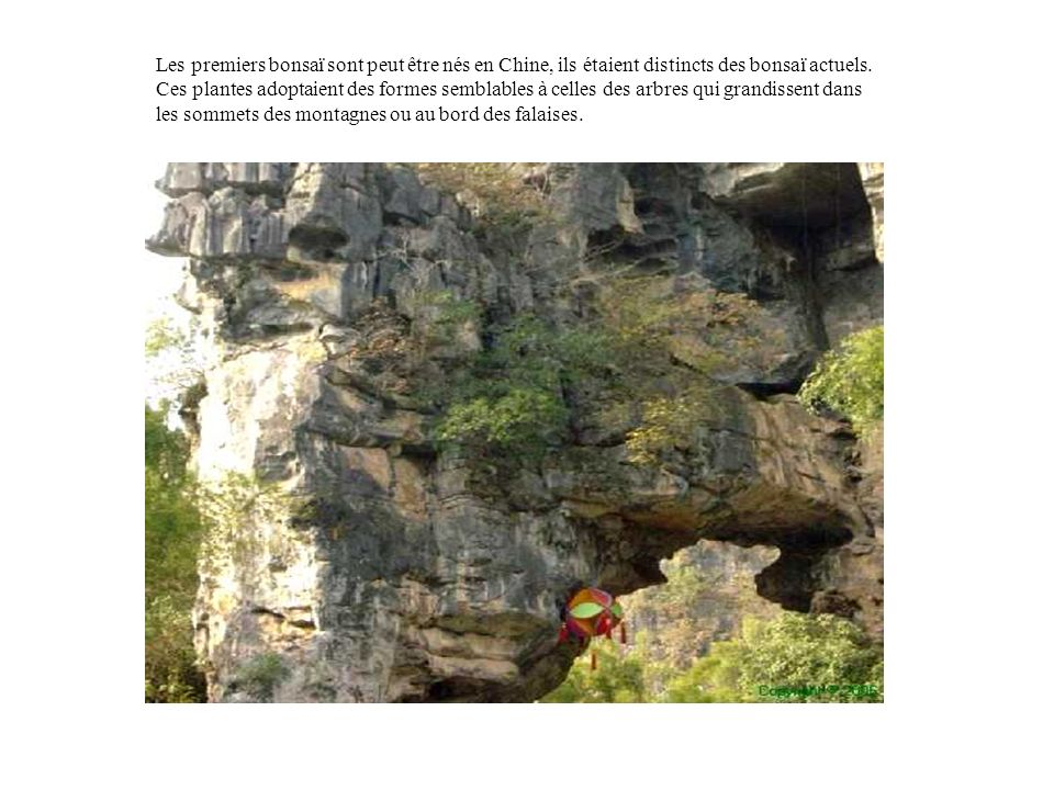 Les premiers bonsaï sont peut être nés en Chine, ils étaient distincts des bonsaï actuels.