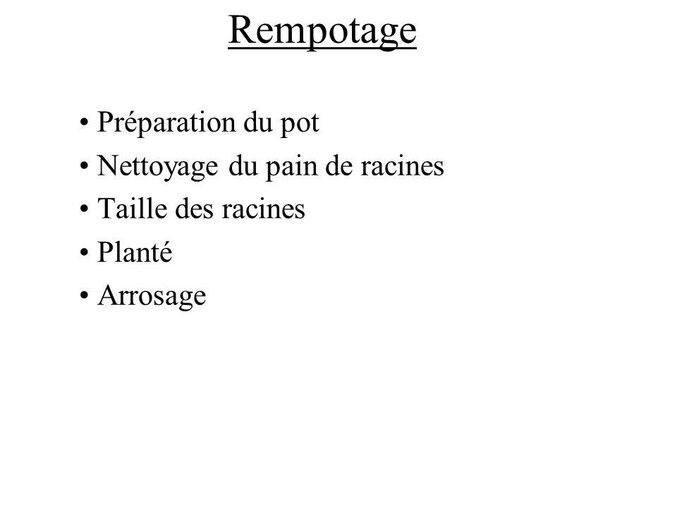Rempotage Préparation du pot Nettoyage du pain de racines