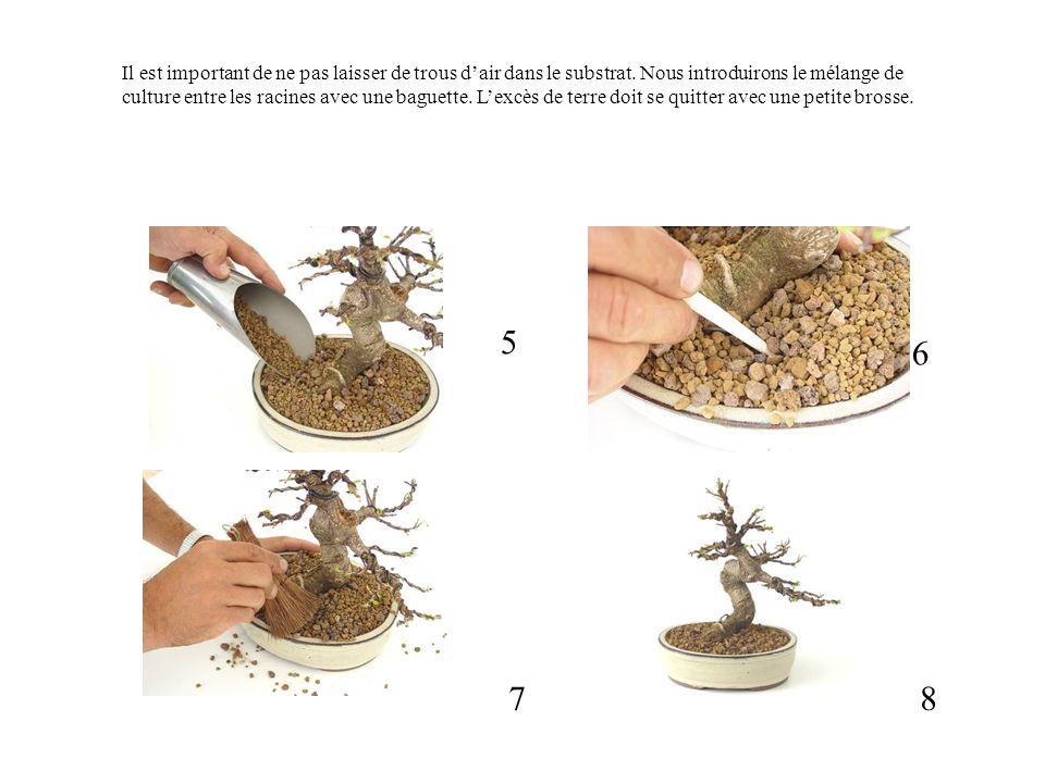 Il est important de ne pas laisser de trous d'air dans le substrat