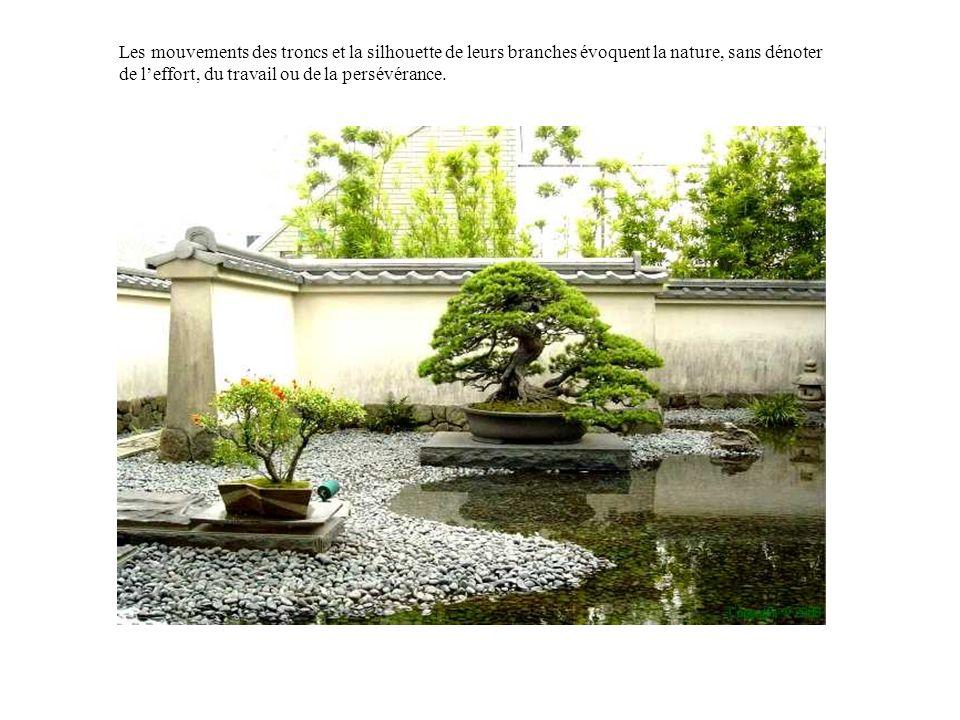Les mouvements des troncs et la silhouette de leurs branches évoquent la nature, sans dénoter de l'effort, du travail ou de la persévérance.