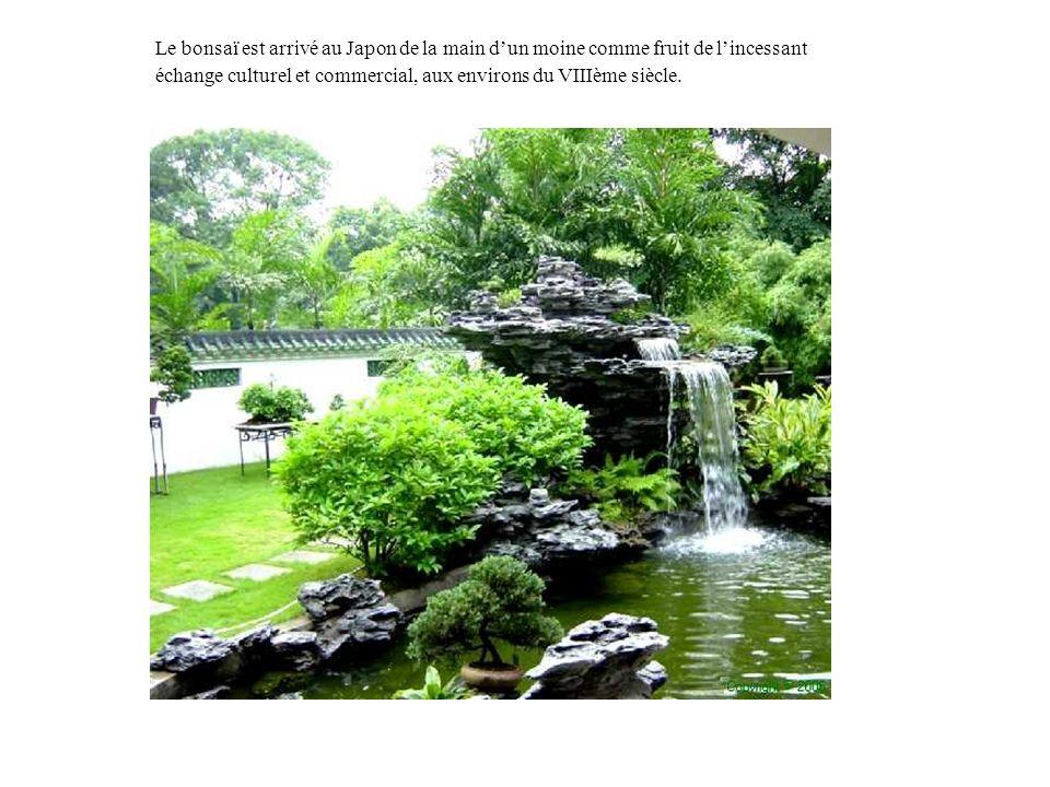 Le bonsaï est arrivé au Japon de la main d'un moine comme fruit de l'incessant échange culturel et commercial, aux environs du VIIIème siècle.
