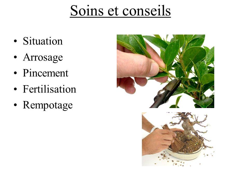 Soins et conseils Situation Arrosage Pincement Fertilisation Rempotage