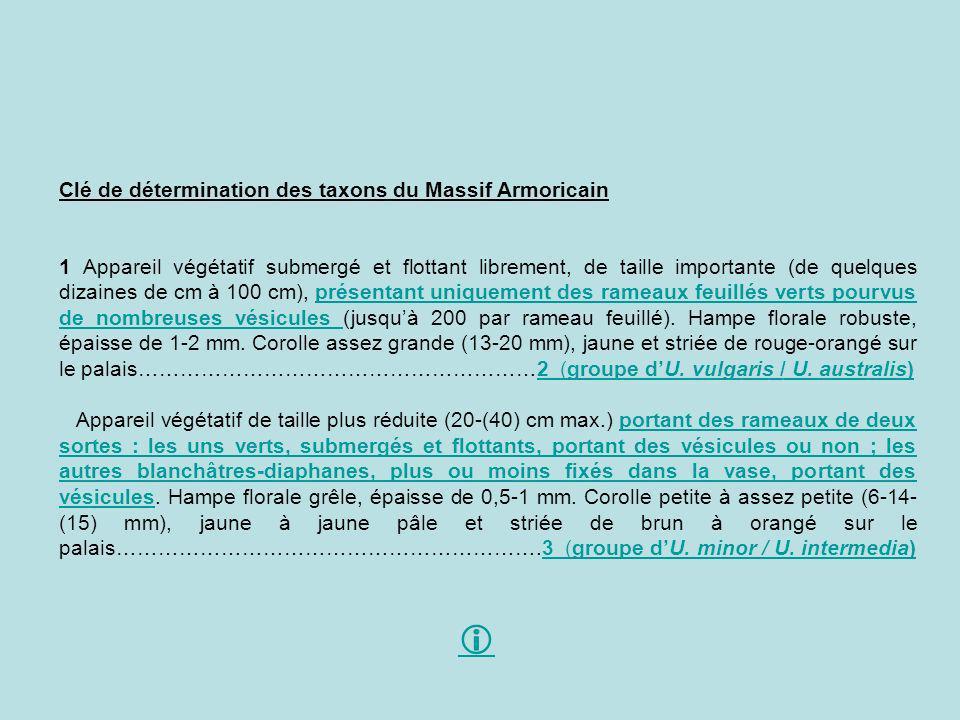 Clé de détermination des taxons du Massif Armoricain