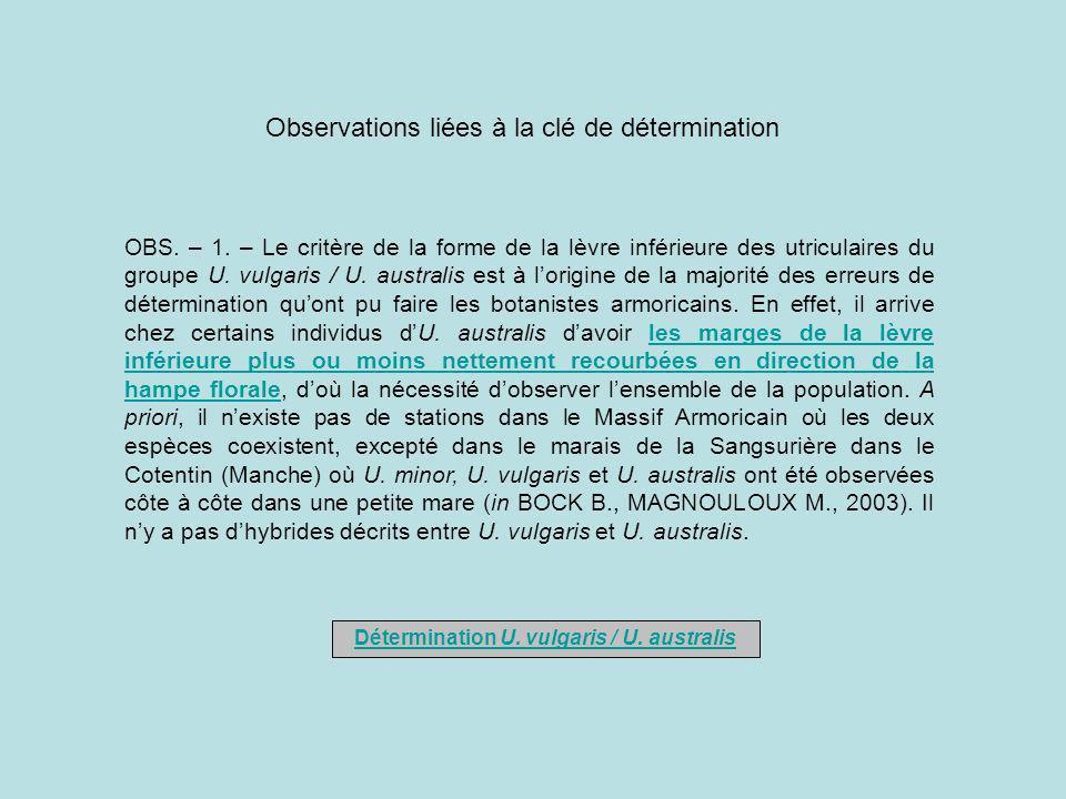 Détermination U. vulgaris / U. australis
