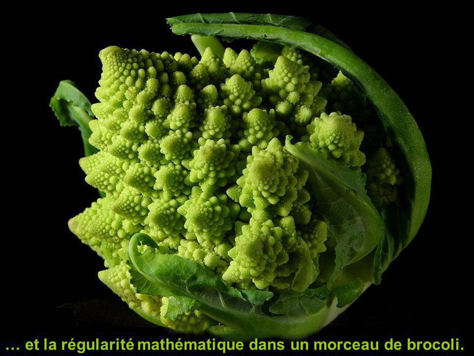 … et la régularité mathématique dans un morceau de brocoli.