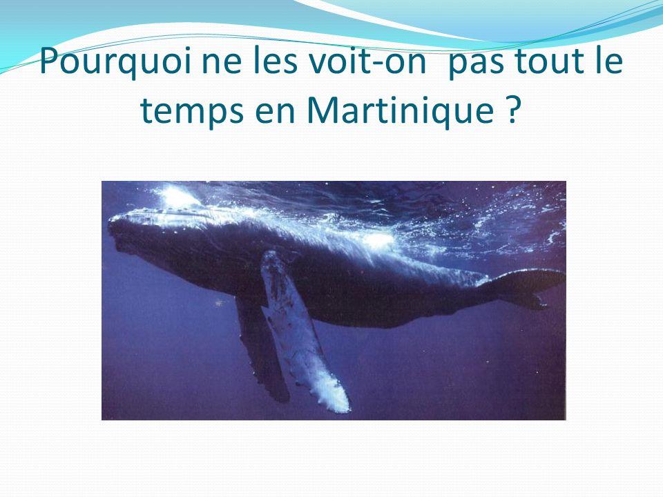 Pourquoi ne les voit-on pas tout le temps en Martinique