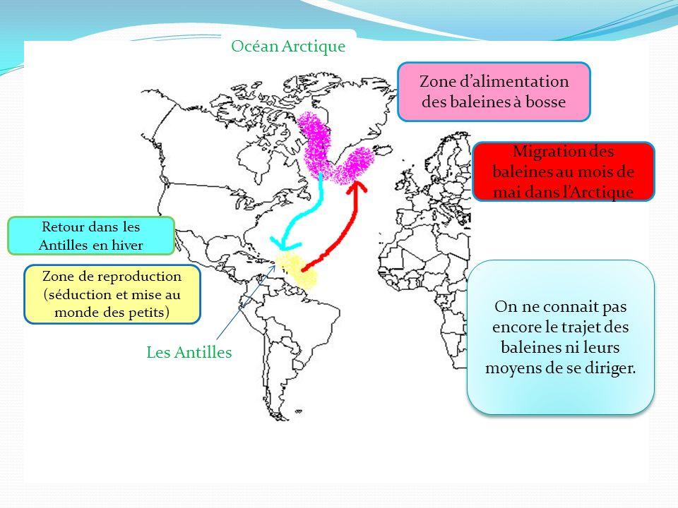 Zone d'alimentation des baleines à bosse
