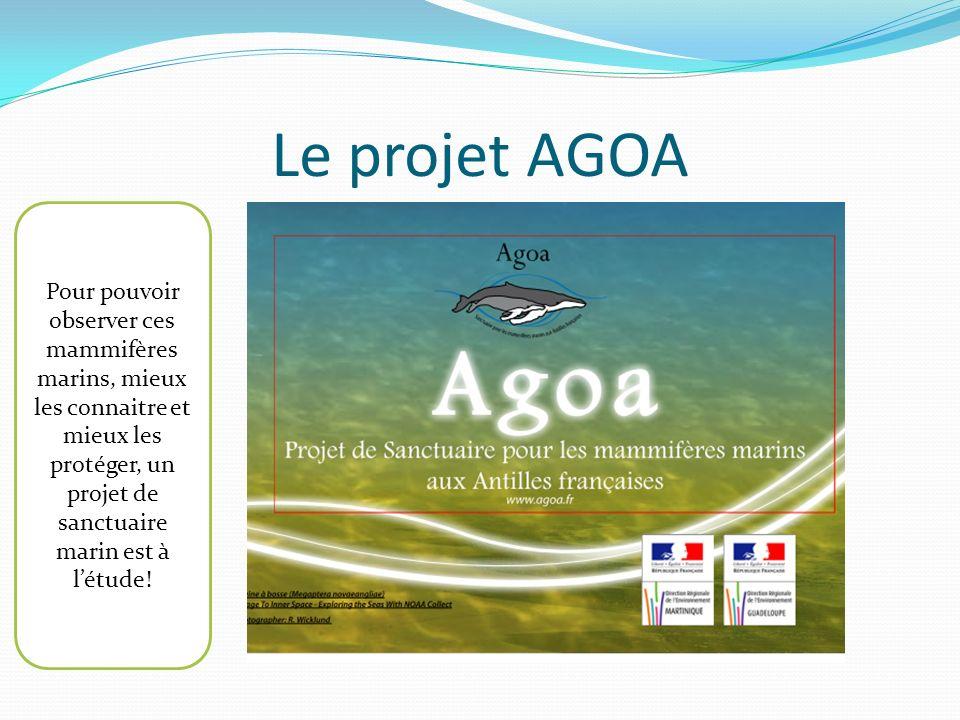 Le projet AGOA Pour pouvoir observer ces mammifères marins, mieux les connaitre et mieux les protéger, un projet de sanctuaire marin est à l'étude!