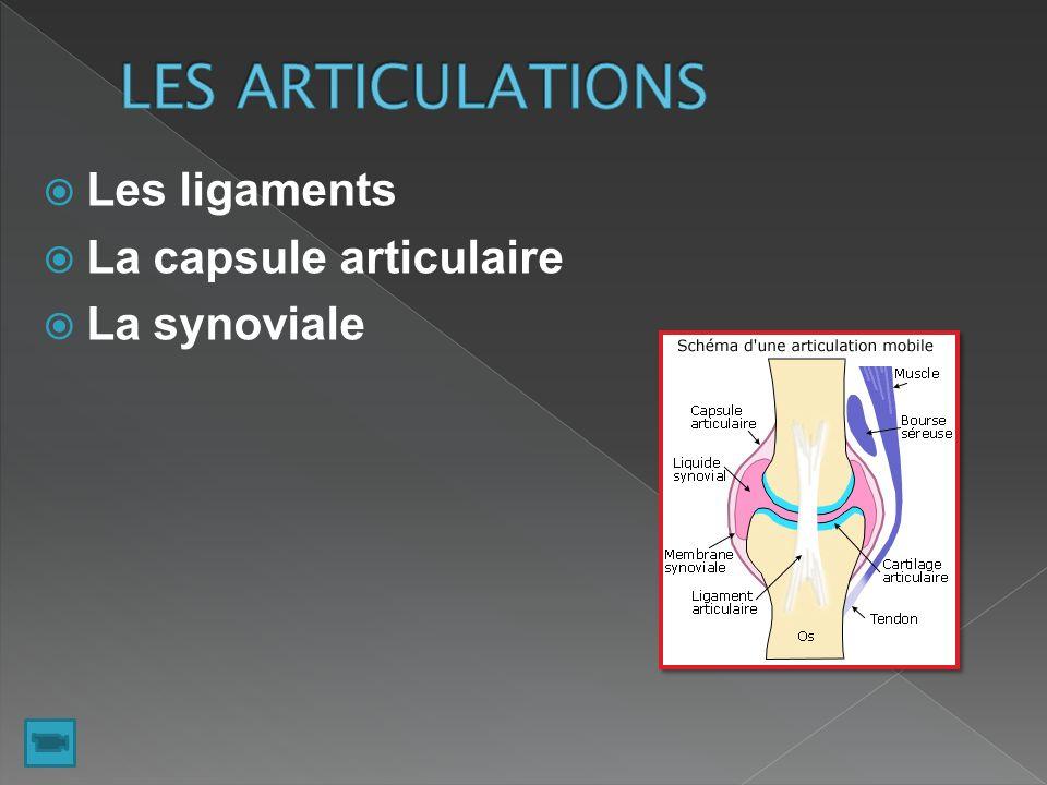 LES ARTICULATIONS Les ligaments La capsule articulaire La synoviale