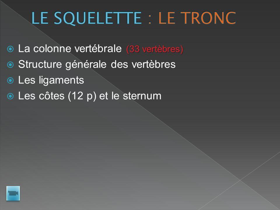 LE SQUELETTE : LE TRONC La colonne vertébrale (33 vertèbres)