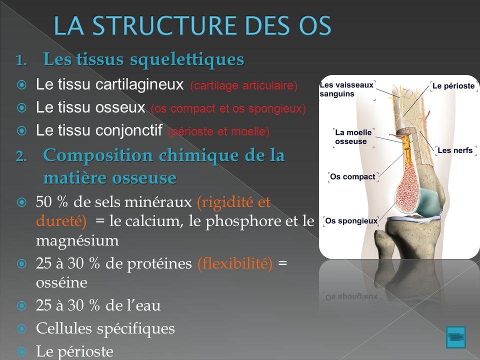LA STRUCTURE DES OS Les tissus squelettiques
