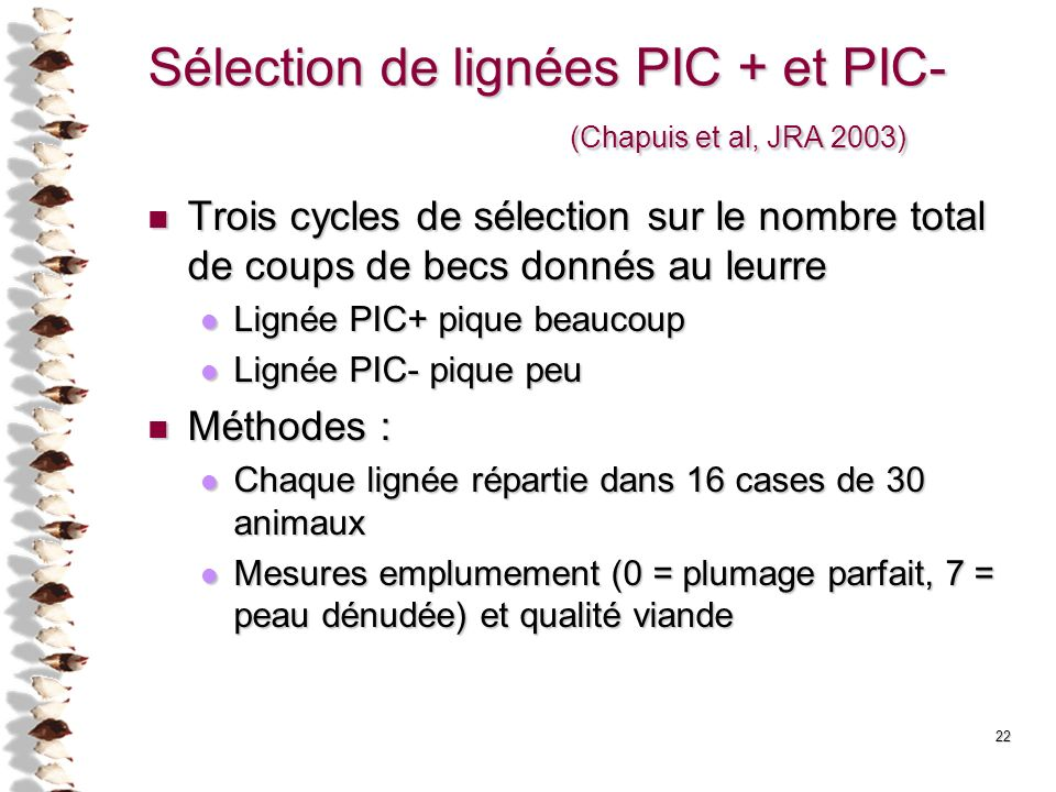 Sélection de lignées PIC + et PIC- (Chapuis et al, JRA 2003)