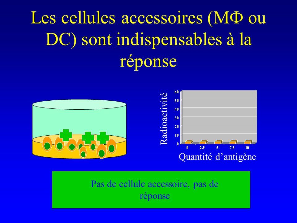 Les cellules accessoires (MF ou DC) sont indispensables à la réponse