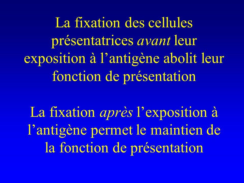 La fixation des cellules présentatrices avant leur exposition à l'antigène abolit leur fonction de présentation La fixation après l'exposition à l'antigène permet le maintien de la fonction de présentation