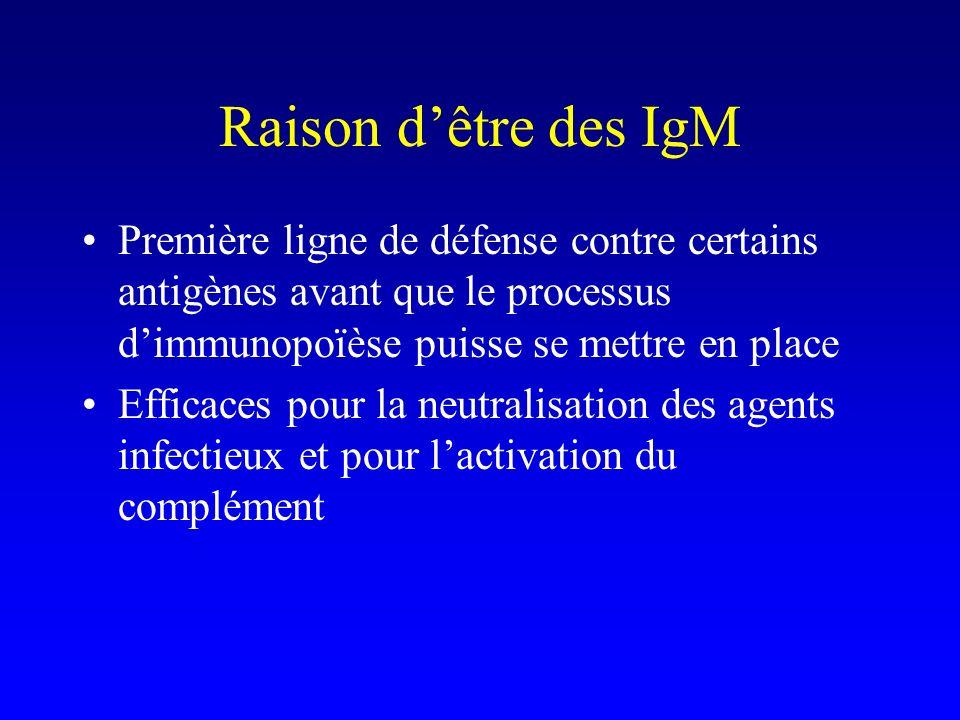 Raison d'être des IgM Première ligne de défense contre certains antigènes avant que le processus d'immunopoïèse puisse se mettre en place.