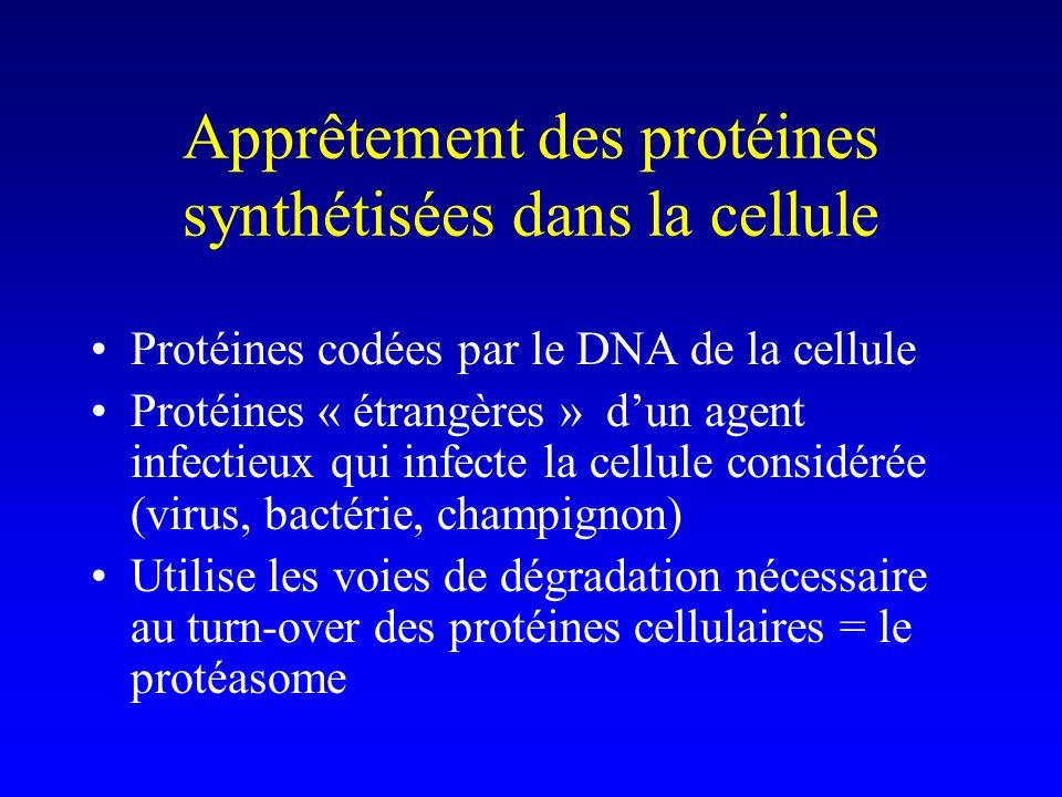 Apprêtement des protéines synthétisées dans la cellule