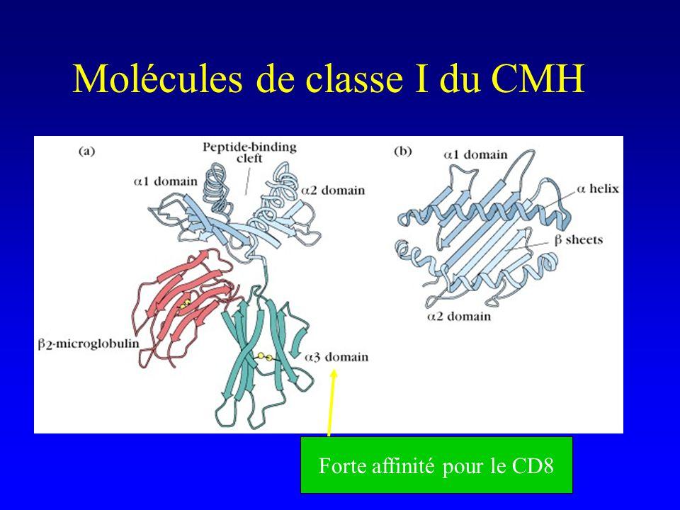Molécules de classe I du CMH