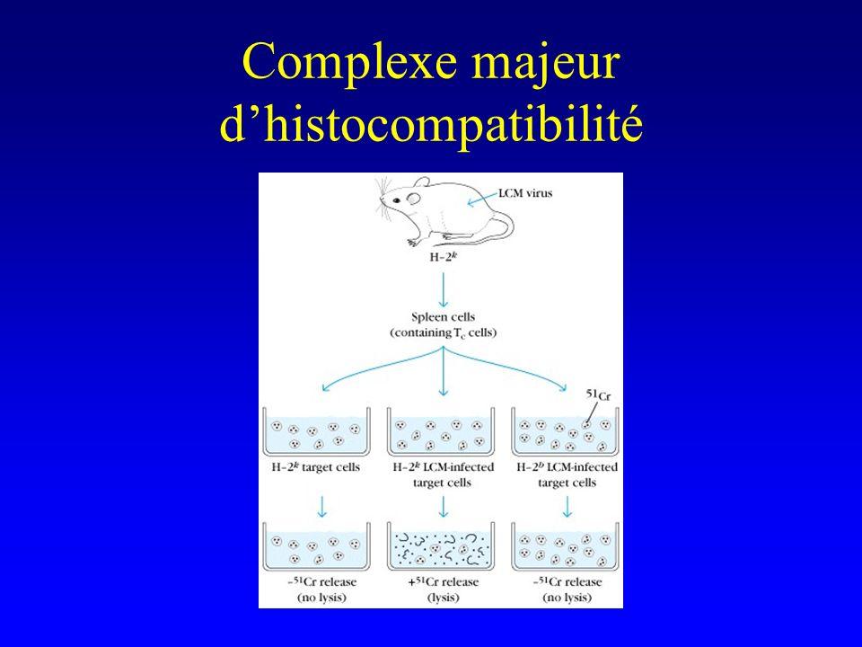 Complexe majeur d'histocompatibilité
