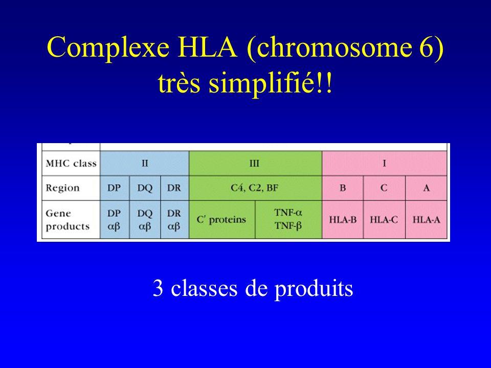 Complexe HLA (chromosome 6) très simplifié!!