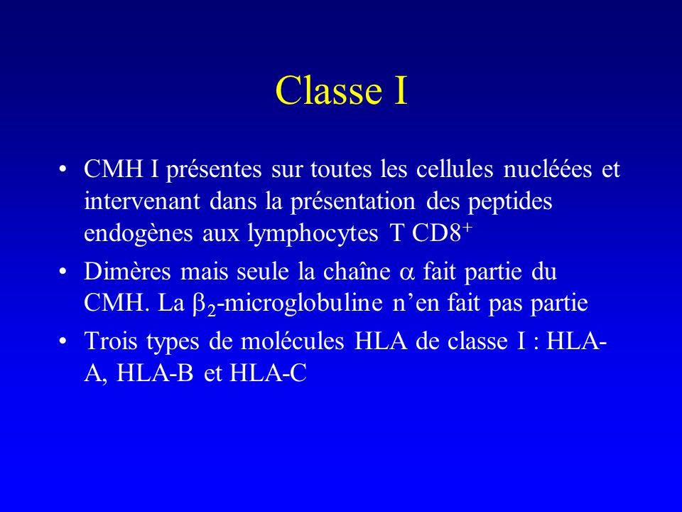 Classe I CMH I présentes sur toutes les cellules nucléées et intervenant dans la présentation des peptides endogènes aux lymphocytes T CD8+