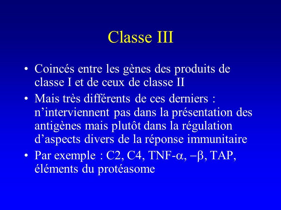 Classe III Coincés entre les gènes des produits de classe I et de ceux de classe II.