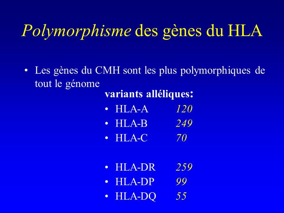 Polymorphisme des gènes du HLA