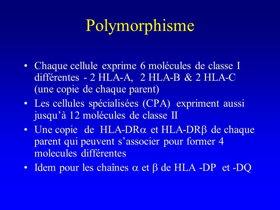 Polymorphisme Chaque cellule exprime 6 molécules de classe I différentes - 2 HLA-A, 2 HLA-B & 2 HLA-C (une copie de chaque parent)