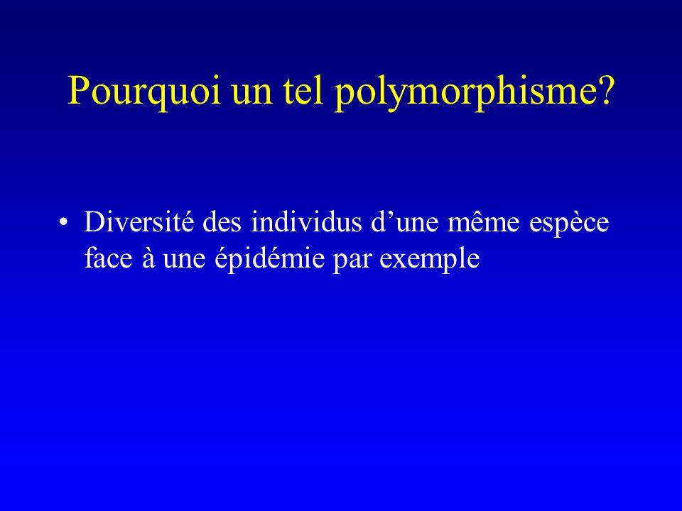 Pourquoi un tel polymorphisme