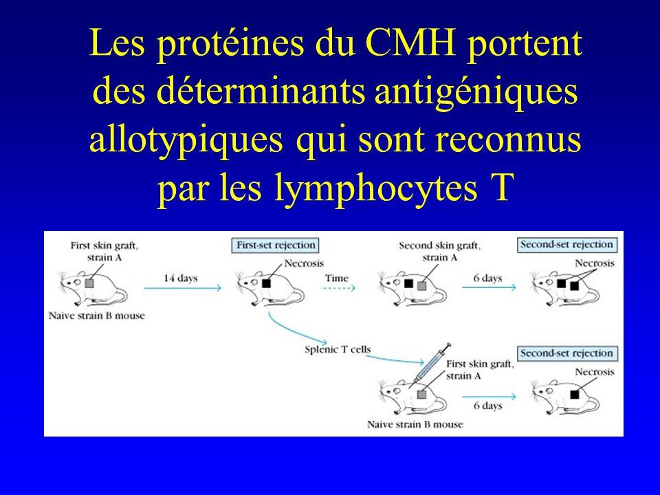 Les protéines du CMH portent des déterminants antigéniques allotypiques qui sont reconnus par les lymphocytes T