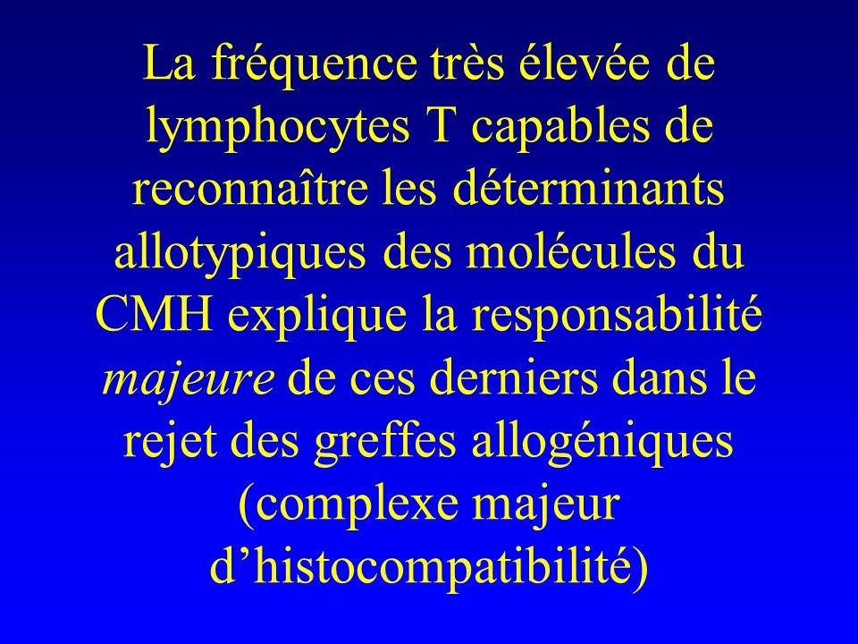 La fréquence très élevée de lymphocytes T capables de reconnaître les déterminants allotypiques des molécules du CMH explique la responsabilité majeure de ces derniers dans le rejet des greffes allogéniques (complexe majeur d'histocompatibilité)