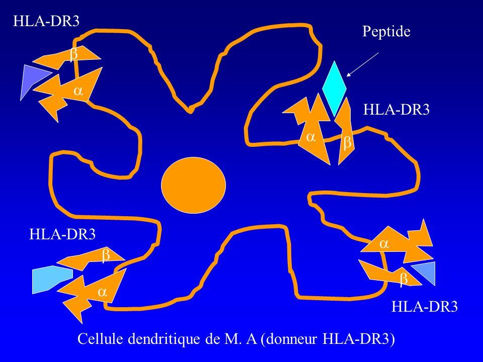 HLA-DR3 Peptide. b. a. HLA-DR3. a. b. HLA-DR3.