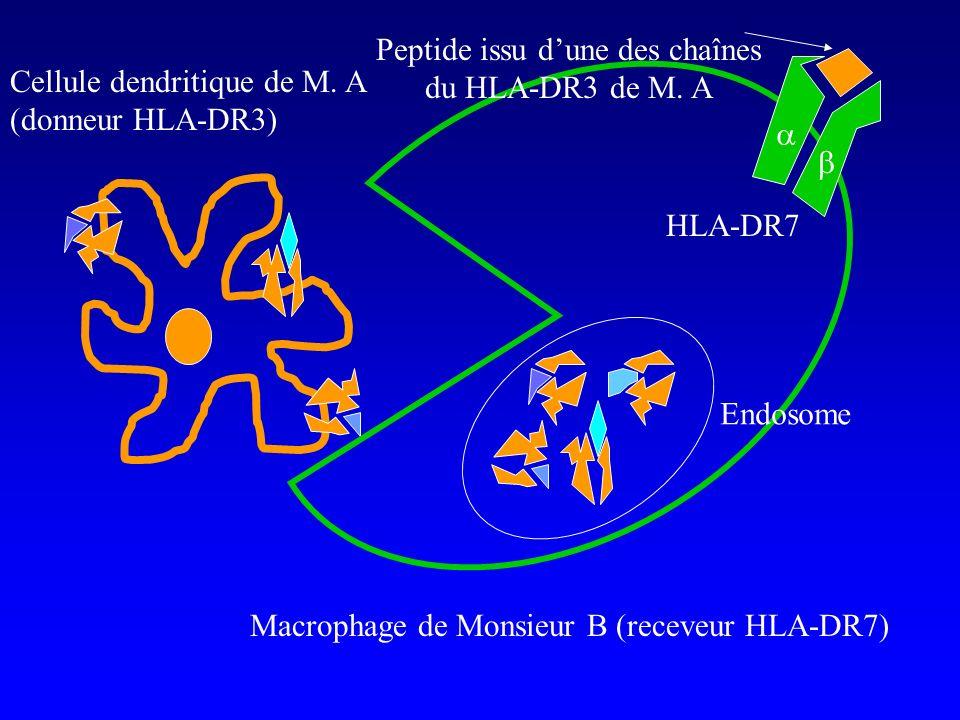 Peptide issu d'une des chaînes du HLA-DR3 de M. A